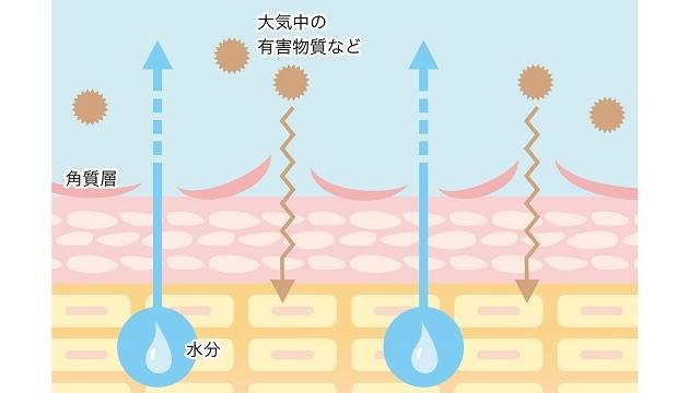 肌カサカサ角質層