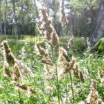 5月の花粉アレルギーと長引く咳の危険性は?