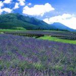 九州のラベンダー畑の見頃時期は?大分や福岡や佐賀のおすすめ3選(2018年)