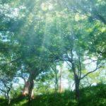関東の森林浴におすすめの公園11選は?効果的な時間帯があった!