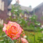 東京でおすすめのバラ園3選の開花時期は?春も秋もイベントが盛りだくさん!