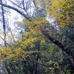 関西の紅葉狩りの見頃と穴場スポット6選のご紹介!+香り狩りも楽しむとは?