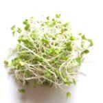 ブロッコリースプラウトの効果的な食べ方は根っこが決め手?種は洗えば食べられるのか